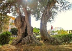 oliveira111